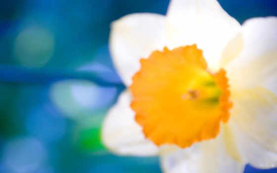 цветы, wallpaper Фон № 2202 разрешение 1920x1080