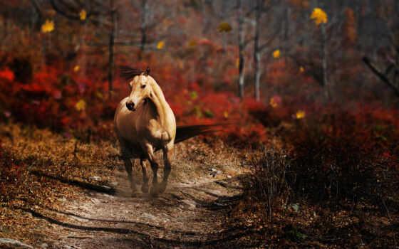 лес, конь, животное, природа, дорожка, картинка, картинку, животные,