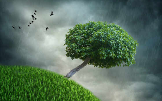 tree, green, dark, leaves, style, storm, apple, with, lonely,