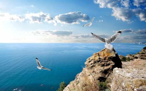 oblaka, море, чайки, чёрное, небо, browse, скалы,