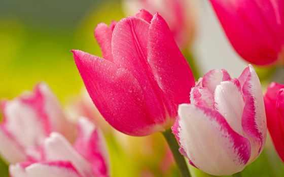 flowers, free, цветы Фон № 149252 разрешение 1920x1200
