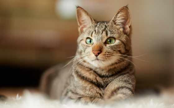 изображение, desktop, free, картинка, zhivotnye, кошки, zetsuai, madara,
