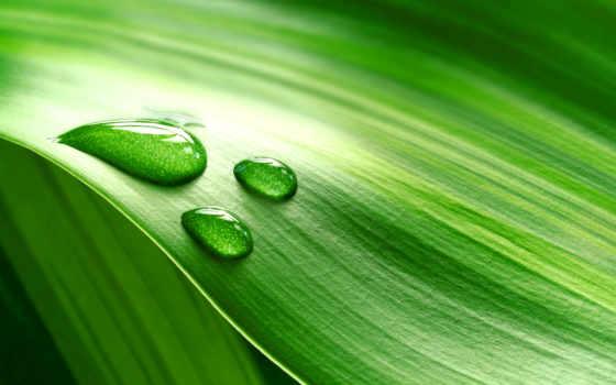 телефон, капли, листьях, телефонов, зелёных, ваше, стандартных, широкоформатных, мониторов, но, rabstol,