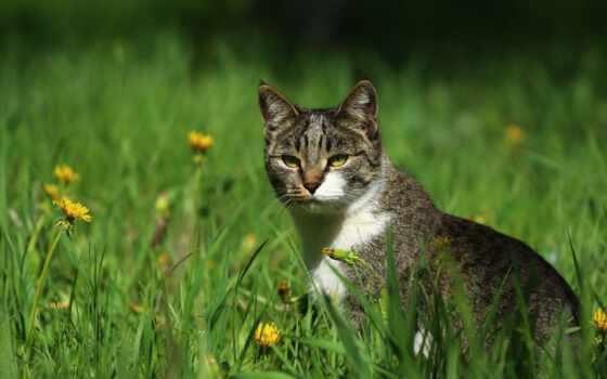 трава, кот, фон, permission, добавить, одуванчик, оригинал, ваше