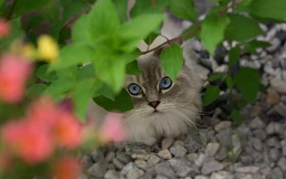 кот, ragdoll, gato, котенок, gatto, дерево, con, монитор, lion, пушистый