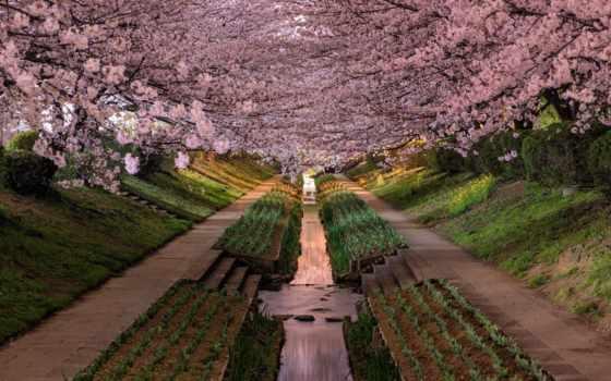 японии, пейзажи, agustin