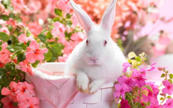 весна, season, flowers