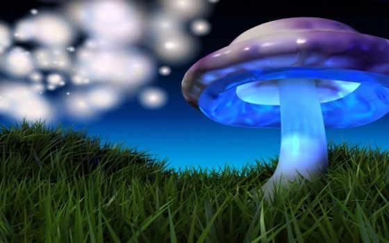 mushroom, грибы, colorful