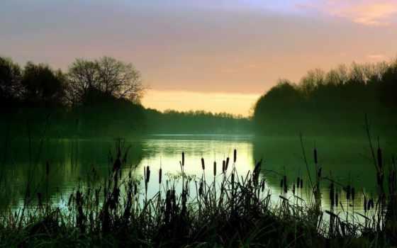 камыш, озеро, камыши, лес, туман, water,