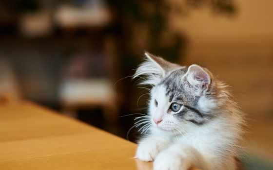 zhivotnye, картинка, кошки, лапы, собаки, котята, милые,