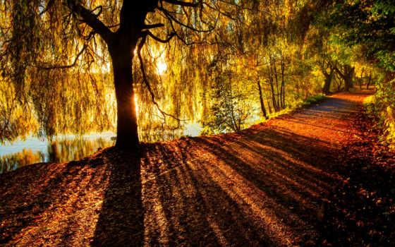 осень, листья, пасть, река, тропинка, trees, природа, лес, дорога, park, тона,