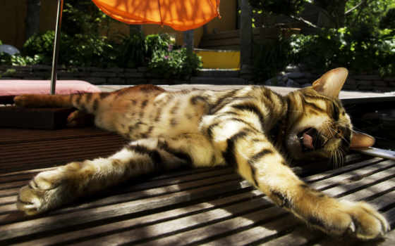 кот, солнышке, греется, daler, red, кошки, добавить, избранные, white, чёрно,
