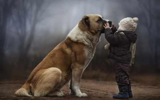 собака, ребенок, small, когда, хаска