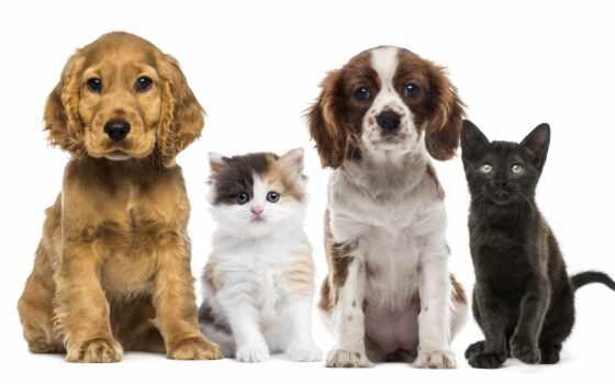 собака, кот, pet, ветеринарный, площадь, animal, have, cleveland
