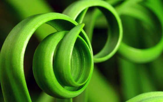 зеленые, растения