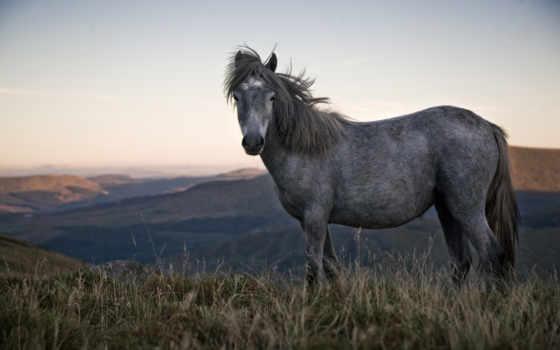 лошадь, горы