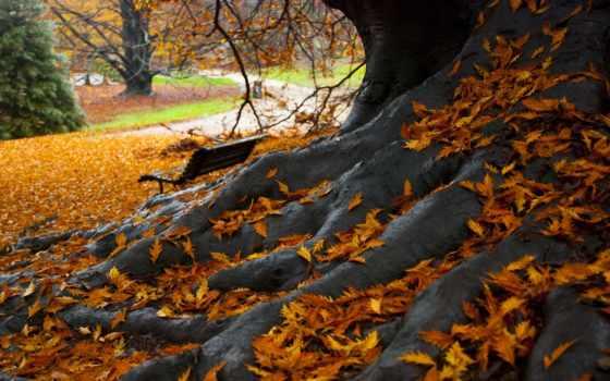парк, осень