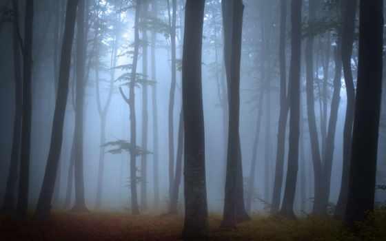 лес, туман, mystic, foggy, стена, stock,
