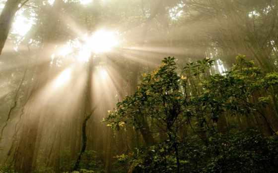 восход, jungle, закат, sun, лес, природа, свет, trees,