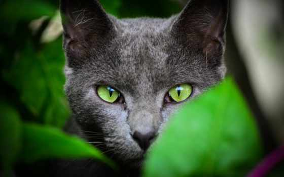 кот, зелёный, eyes