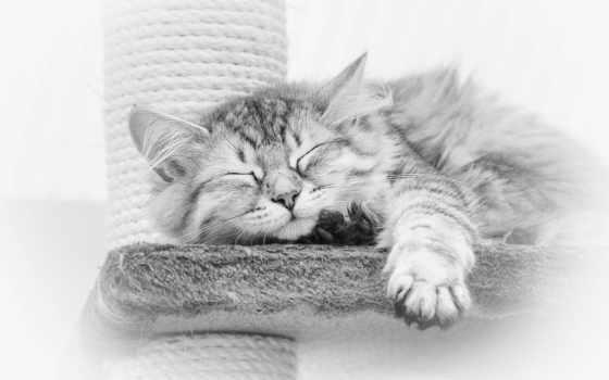 ночи, спокойной, картинка, котенок, кот, надписями, кошки, белая, white, доброй,