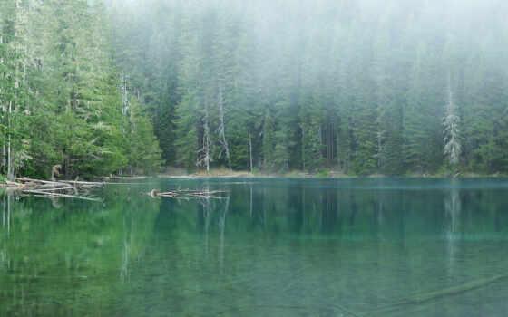лес, озеро