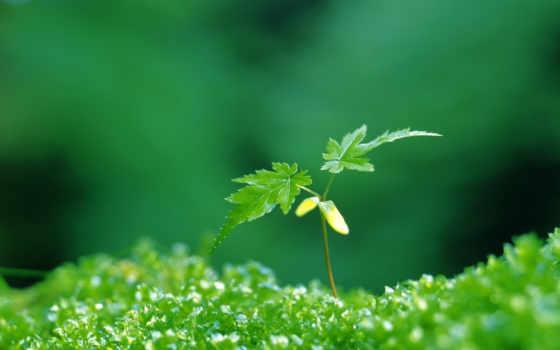 зелёный, растение