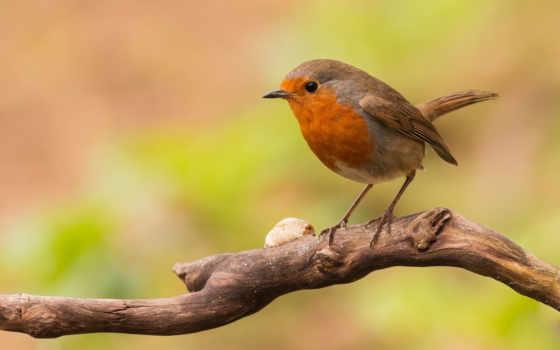 tweet, best, птица