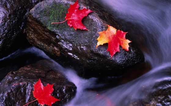 jesienne, tapety, liście