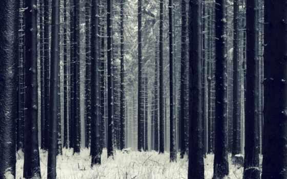 лес, winter, dark, fir,