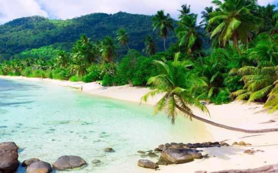 пляж, море, пальмы, песок, tropics, берег, browse,