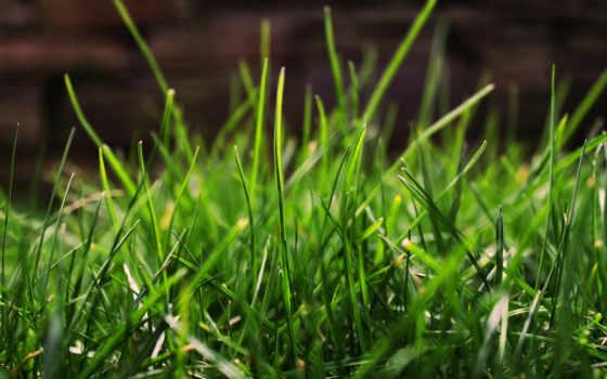 макро, трава, зелёный, зелёная, windows, море, фотообои,