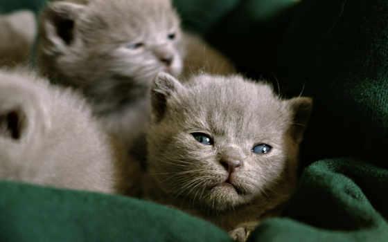 котята, животные Фон № 6226 разрешение 1920x1080