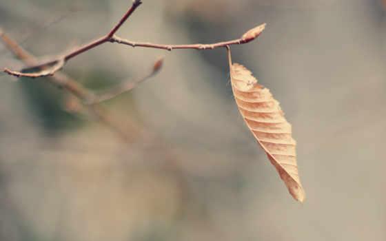 лист, макро, сухой