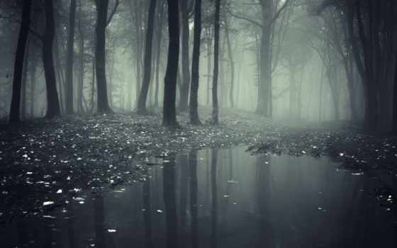 туман, лес, природа