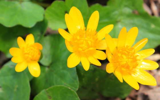 цветы, установить, можно