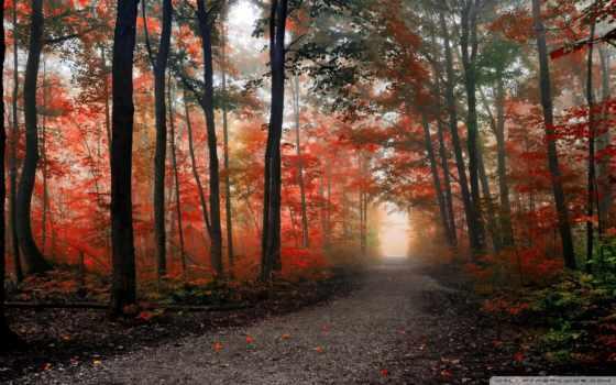 немо, mount, пасть, канада, онтарио, trail, осень, лес, burlington, туман, можно,