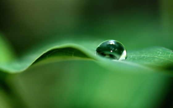 природа, photography, drops, ipad, water, drop, leaf,