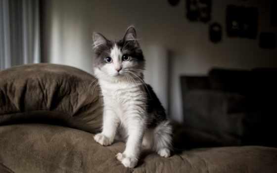 котенок, пушистый, spotted, htc, диван, desktop, нояб,