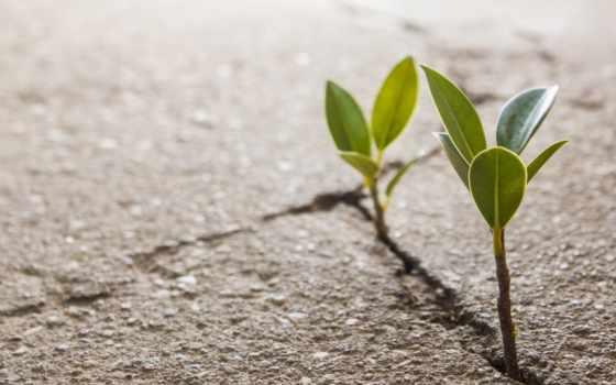 росток, асфальт, рассада, растение, фотографий, листва, сквозь, макет, ростки, зелёный,