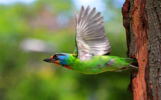 птица, зелёная, полет, дерево, крылья, птицы, фоны, заставки, nest, multicolored,