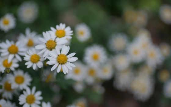 много, цветы