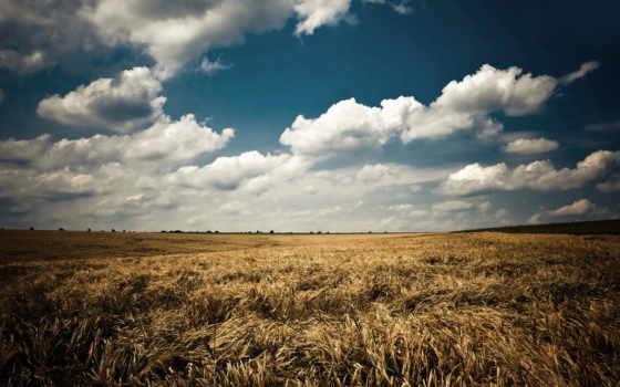 поле, природа, небо