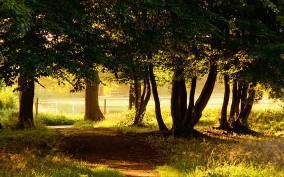 природа, деревья, количество
