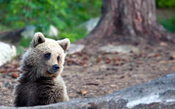 природа, summer, медведь