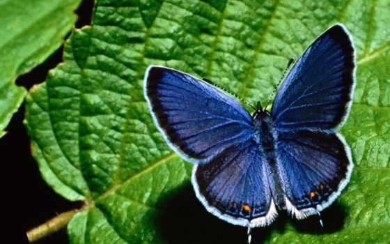 бабочки, бабочка