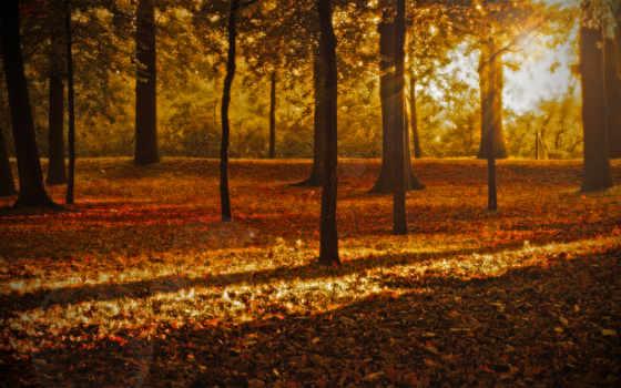 природа, листопад, осень