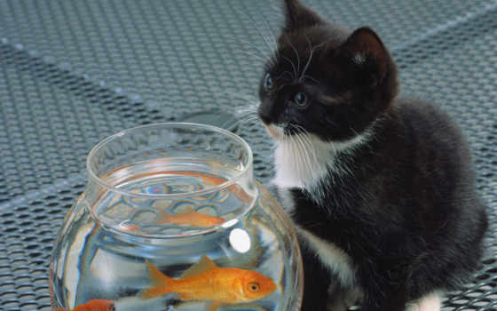кот, fish, аквариум, black, котенок, white,