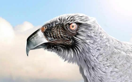 орлан, wings, free