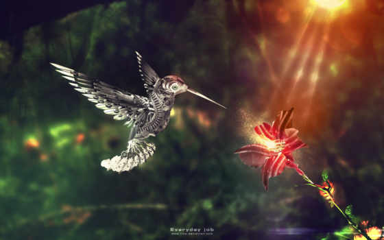 колибри, красивые, цветы